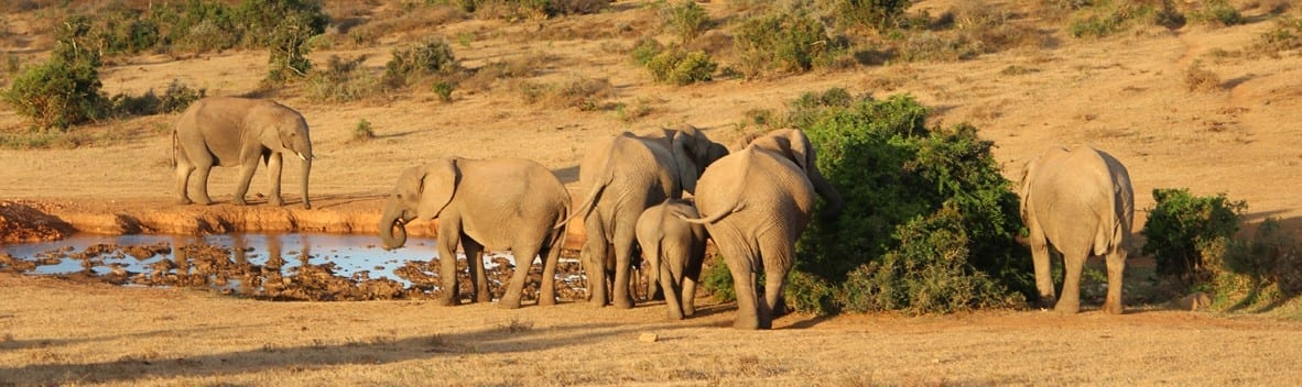 e-book Tales from Africa Travel southern Africa What you need to know before choosing a safari 3